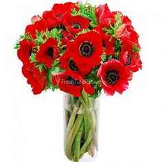 Anemone Flowers - Red