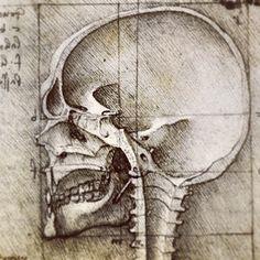 Da Vinci Skull/side view