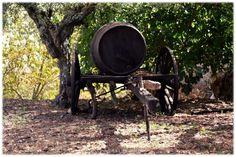 [2012 - Castelo Rodrigo - Portugal] #fotografia #fotografias #photography #foto #fotos #photo #photos #local #locais #locals #cidade #cidades #ciudad #ciudades #city #cities #europa #europe @Visit Portugal @ePortugal