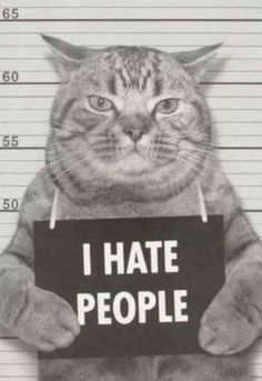 Funny Animal Pictures, Cute Funny Animals, Funny Cats, Crazy Cat Lady, Crazy Cats, Hate Cats, I Hate People, Tier Fotos, Cat Quotes