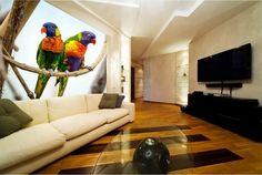 Zwiarzęta - parka kolorowych papug