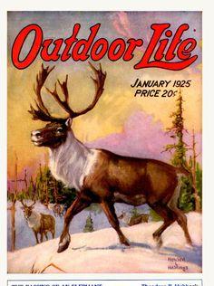 Covers Vintage Ads, Vintage Images, Vintage Prints, Vintage Posters, Outdoor Signs, Outdoor Art, Outdoor Life, Hunting Art, Deer Hunting