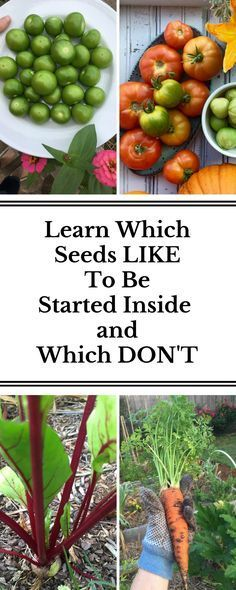 before you start planting your seeds check to see which ones like to remain in