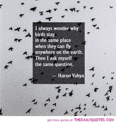 i-always-wonder-why-birds-stay-harun-yahya-motivational-inspirational-quotes-sayings-pictures.jpg 500×530 pixels