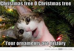 Oh Christmas tree, your ornaments are history...Yep that's pretty much how it is at our home!  TGIF!  Hope everyone has a fabulous weekend!