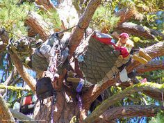 tree camping at the rainbow gathering