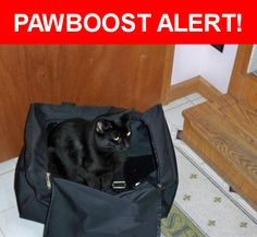 Please spread the word! Nikko was last seen in New Philadelphia, OH 44663.    Nearest Address: Near Bank Ln SW & 2nd St SW