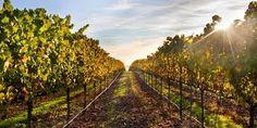 Vignoble Pervenches on Quebec's Wine Route, Farnham Qc