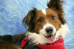Max is one of our many adoptable dogs. Click on his picture to see if he is still available for adoption.