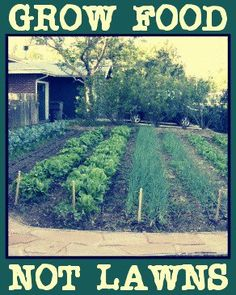 grow food, not lawns, daughters job, I don't do gardens