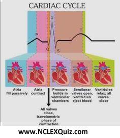 Phases of Cardiac Cycle PQRST Heart Rhythm Interpretation Physiology of the H. Cardiac Nursing, Nursing Mnemonics, Cardiac Cycle, Ekg Interpretation, Nursing Information, Rn School, Medical School, Nursing School Notes, Nursing Tips