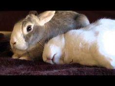 Bunny dreams of treats - December 31, 2013 - From today's Daily Bunny post: http://dailybunny.org/2013/12/31/bunny-dreams-of-treats/ !