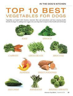 The Top 10 Best Vegetables for Dogs! As always, everything in moderation... Vegetables chunks are the perfect healthy homemade dog treats. More