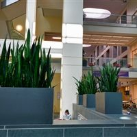 Superb Botanicus Award Winning Design Landscaping Design, Office Plants, Tropical  Plants, Indoor Plants,