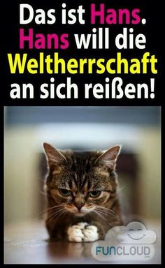 Weltherrschaft>: D - Funny Pets :D - chatte Tierischer Humor, Man Humor, Animals And Pets, Funny Animals, Cute Animals, Funny Cute, Funny Shit, Cat Shirts, Grumpy Cat