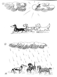 Dachshunds, Right. Like they'd go out in the rain willingly!