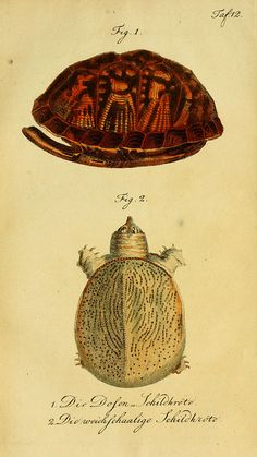 Herrn de la Cepede's Naturgeschichte der Amphibien, 1800 -1802