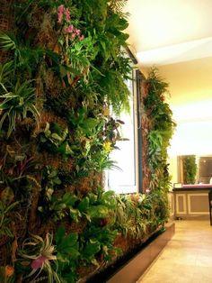 Mur végétal intérieur                                                                                                                                                                                 Plus