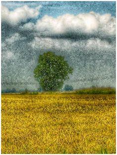A volte la natura può sembrare un quadro....
