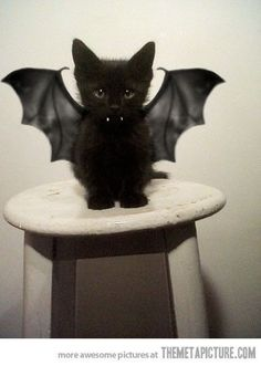 I don't like dressing up animals but, @Maddie Findley-Reddy you need to get a new black kitten and do this. Or I guess you could get a little black puppy ;)