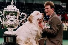 1991 - Sh. Ch. Raycrofts Socialite - Clumber Spaniel Clumber Spaniel, Spaniels, Cavalier, Dog Love, Labrador Retriever, Amazing, Dogs, Animals, Labrador Retrievers