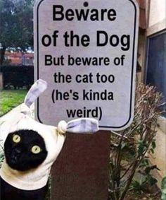 BEWARE: My cat's a psycho.