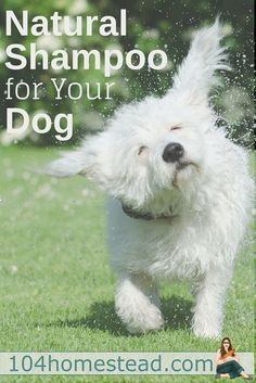 With oatmeal for sensitive skin, coconut oil for moisture, baking soda for funky odors, and essential oils to keep fleas at bay, you'll love this DIY dog shampoo.