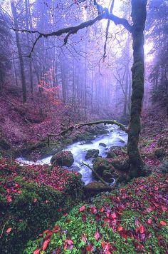 Magical forest - Franche-Comté, France (by Philippe Saire)