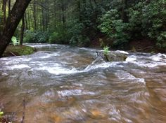 Fightingtown creek - rocking and rolling!