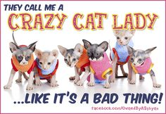 They call me a CRAZY CAT LADY like it's a bad thing! http://www.facebook.com/OwnedByASphynx