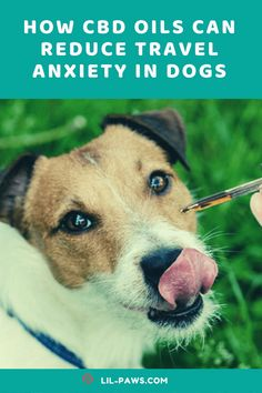How CBD OILs can reduce travel anxiety in dogs? Making use of CBD oil as a natural treatment for anxiety has boomed in popularity over the past year. The all-natural oil does something in the endocannabinoid system, which is present in both the animal as well as human bodies. When this inner system is doing optimally, we feel far more loosened up, well balanced, and happy! #cbdoil #cbd #hemp #cbdhealth #cannabis #cbdproducts #cbdlife #cannabiscommunity #cbdmovement #hempoil #cbdheals Pet Travel Carrier, Dog Travel, Natural Treatment For Anxiety, Natural Treatments, Places In California, California Travel, Travel Supplies, Endocannabinoid System, Dog Anxiety