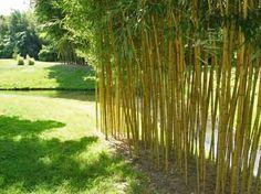 beet-beispiele mit bambus, Hause und garten