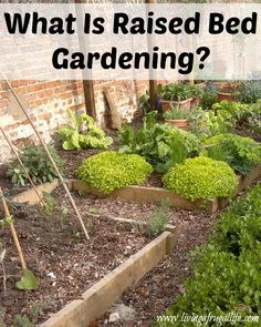 What Is Raised Bed Gardening?