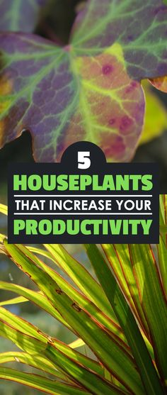 Are you looking to be more productive at your home office or workplace? What if I told you that the secret to unlocking more productivity could come in the form of a plant? Yes...a simple houseplant.