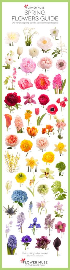 Spring Flowers Guide