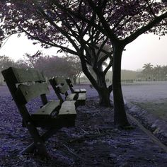 Tree bench. by Faby Camurugy