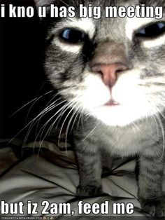 Pretty sure someone took a picture of my cat and her exact thoughts and posted it on pintrest... She wakes me up every morning whenever she's hungry just to feed her! Spoiled..
