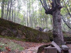 Imágenes alrededor de la Fuente de el Lobo