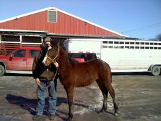 Another Bay Colt.  From Miracles Happen for Horses.