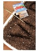 Here's a great early reading and science activity for curious kindergartners.  Learn how to plant your child's name in seeds for a growing writing activity!
