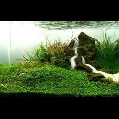 Aquascaping   Aquário Plantado: Lista do AAC Acuavida Aquascaping Contest