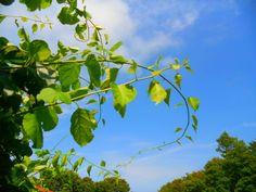 www.gordonspark.com Gordon Parks, Plants, Pictures, Photos, Plant, Grimm, Planets