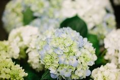 16 Inexpensive Wedding Flowers That Still Look Beautiful For Couples On A Tight Budget