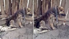 Help rescue dog chained 24/7 in a barn by evil owner!