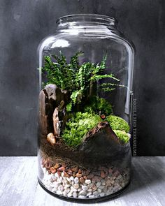 "This piece was a custom request for a fern/moss terrarium in a large 16"" high jar. I started with layered substrate and architectural elements (petrified wood pieces) followed by planting the fern and finishing off with mounds of live moss. #terrarium #fern #moss #nature #landscape #stylegreen #sustainabledesign #dishgarden #green #greendesign #verticalgarden #dbterrariums"