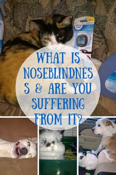 What is #Noseblind & Are You Suffering From It + Share Your Pets #StinkFace for a chance to #win $400 #ad #Febreze