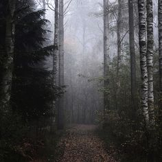 I know there are interesting characters in this forest...