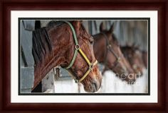 Horses For Sale Framed Print by Brian Mollenkopf Art Prints For Sale, Fine Art Prints, Framed Prints, Horses For Sale, Delaware, Fine Art America, Art Work, Ohio, Animals