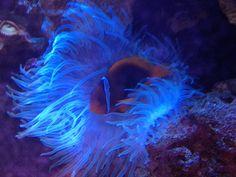 Adventure Aquarium in Camden, New Jersey