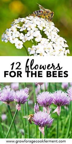 Bees are so important for pollination and the ecosystem, and sadly the bee population is in decline. Learn about 12 common flowers to plant for the bees. This list of flowers to attract bees in your garden or yard will make a beautiful pollinator garden t Bee Attracting Flowers, Thyme Flower, Bee Flower, List Of Flowers, Best Flowers For Bees, Purple Flowers, Planting Flowers, Growing Flowers, Flower Gardening